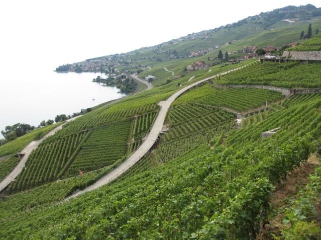 Vignobles de Lavaux